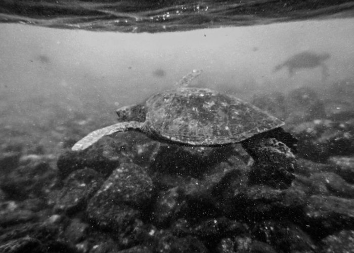 Turtles Greeting Card featuring the photograph Turtle Beach by Casey Barnett