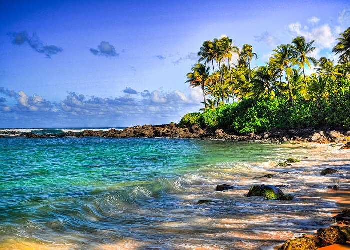 Turtle Beach Laniakea Beach Oahu Hawaii Greeting Card featuring the photograph Turtle Beach by Kelly Wade