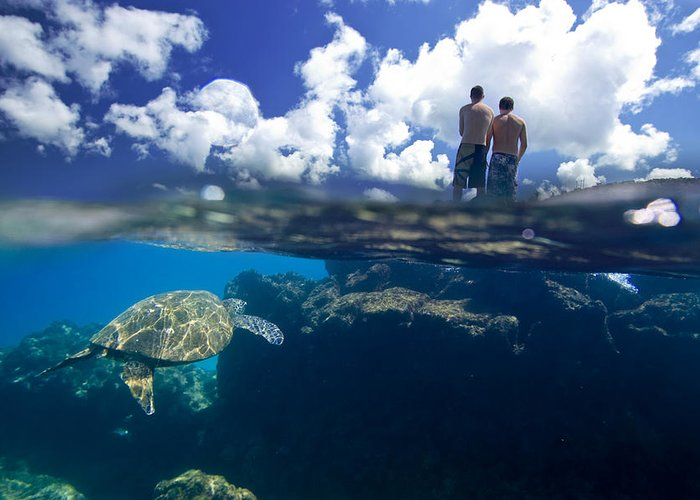 Ocean Under Water Greeting Card featuring the photograph Turtles View by Sean Davey