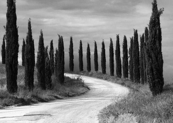 Tuscany Greeting Card featuring the photograph Tuscan Cedars by Hugh Smith