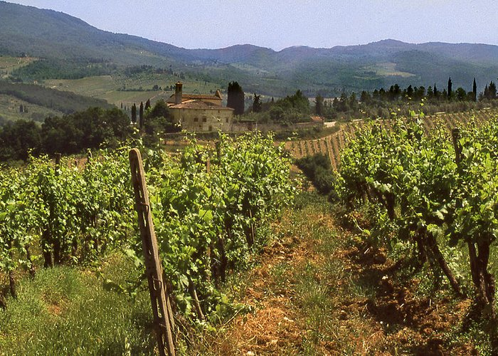 Wine Greeting Card featuring the photograph Tuscany Vineyard No.2 by Mel Felix