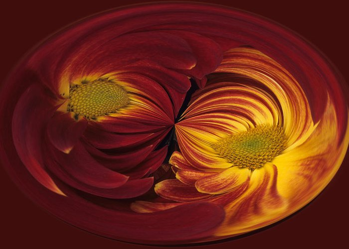 Abstract Greeting Card featuring the photograph Twin Gerbera Abstract by Keith Gondron