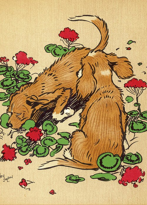 Twin Greeting Card featuring the drawing Twin Puppies, Snip And Snap, Bury by Mary Evans Picture Library