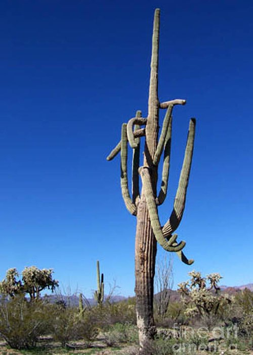 Sahuaro Greeting Card featuring the photograph Twisted Sentinal by Kathy McClure