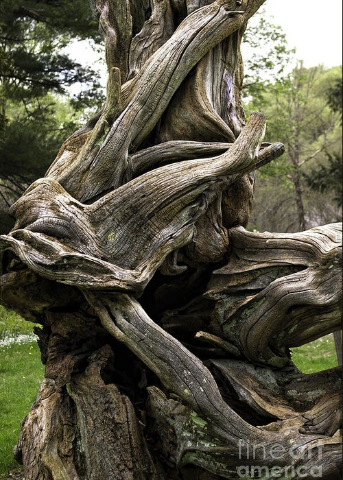Art Greeting Card featuring the photograph Twisted Tree by John Cocchi