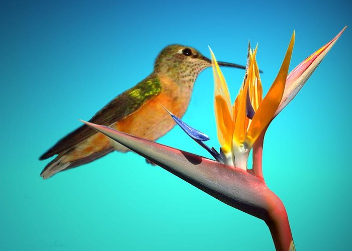 Bird Greeting Card featuring the photograph Two Birds Of Paradise by Joyce Dickens