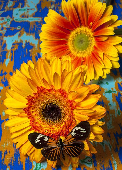 Gerbera Greeting Card featuring the photograph Two Golden Mums With Butterfly by Garry Gay