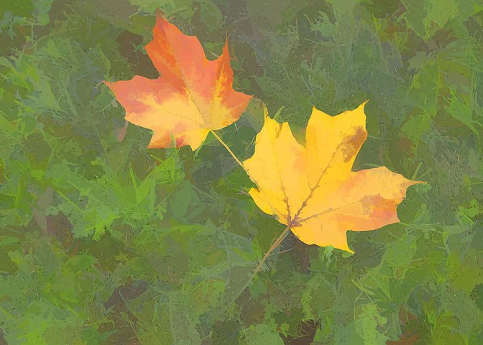 Fall Color Greeting Card featuring the photograph Two Leafs In Autumn by Indiana Zuckerman