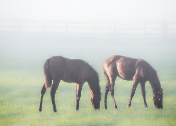 Two Greeting Card featuring the photograph Two Of A Kind by Bill Cannon