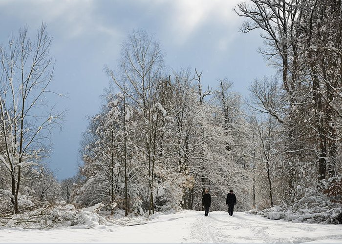 Winter Greeting Card featuring the photograph Two People Doing A Walk In Beautiful Forest In Winter by Matthias Hauser
