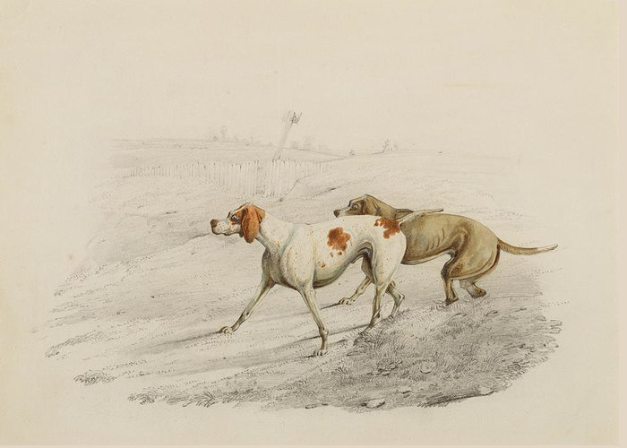 Pointer Dogs Greeting Card featuring the painting Two Pointers by Henry Thomas Alken