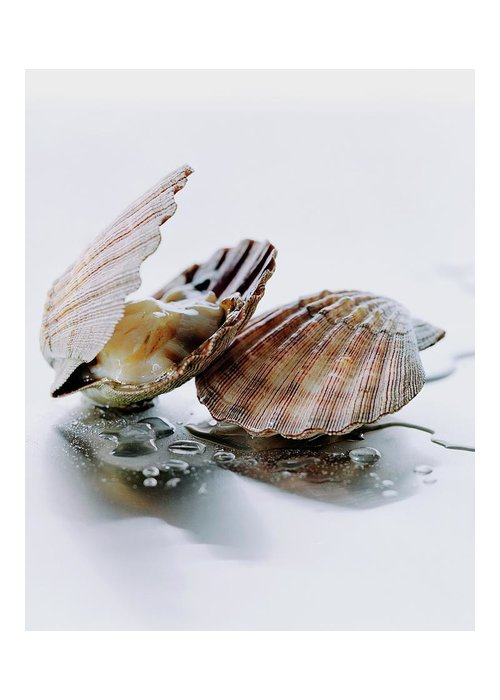 Cooking Greeting Card featuring the photograph Two Scallops by Romulo Yanes