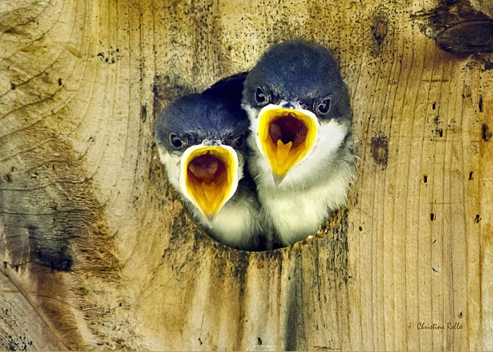 Tree Swallow Greeting Card featuring the photograph Two Tree Swallow Chicks by Christina Rollo