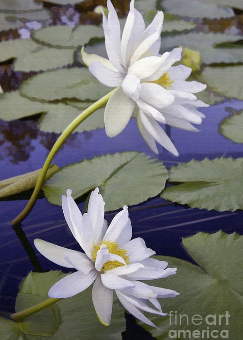 Flower Greeting Card featuring the photograph Two White Lilies by Sharon Foster