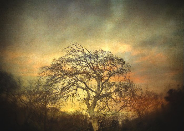 Tree Greeting Card featuring the photograph Un Dernier Crepuscule by Taylan Apukovska
