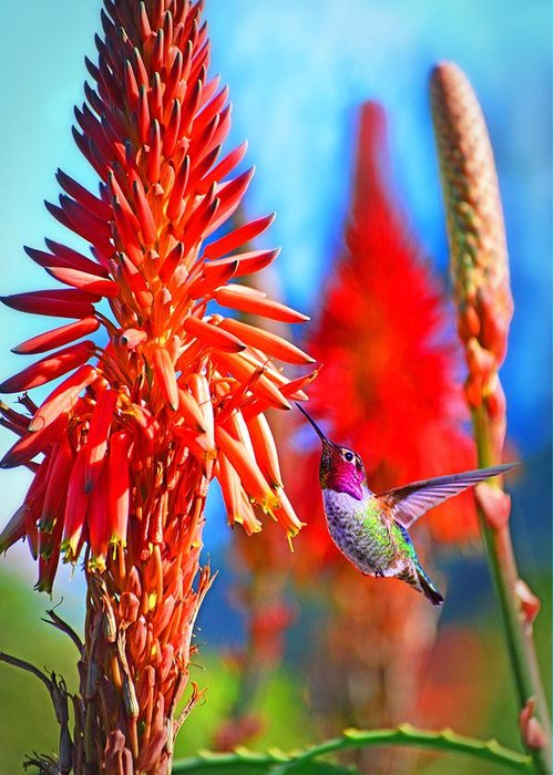 Hummer Greeting Card featuring the photograph Uncaged by Lynn Bauer