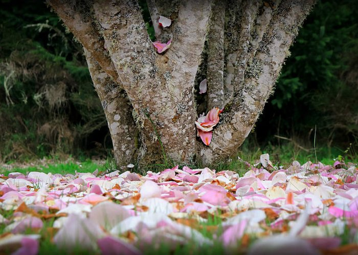 Oregon Greeting Card featuring the photograph Under The Magnolia Tree by Katie Wing Vigil