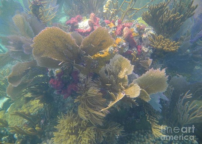 Biscayne National Park Greeting Card featuring the photograph Underwater Colors by Adam Jewell