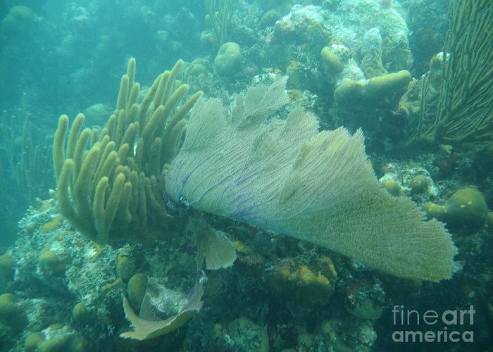 Biscayne National Park Greeting Card featuring the photograph Underwater Forest by Adam Jewell