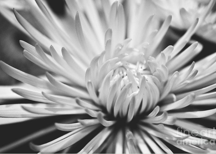 Flower Picture Greeting Card featuring the photograph Unfolding by Artist and Photographer Laura Wrede