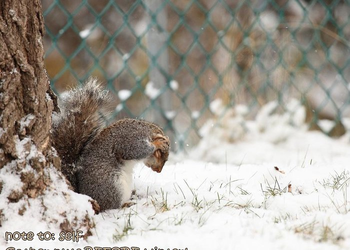 Squirrel;merry Christmas ; Brushing; Snow; Cold; First; Season's Greeting; Christmas Card; Brown; Grey; White; Rodent; Tail; Fur; Closed Eyes; Rubbing; Frustrated; Flustered; Greeting Card featuring the photograph Unprepared For Winter by Robin Martin
