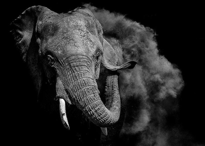 Elephant Greeting Card featuring the photograph Untitled by Vedran Vidak