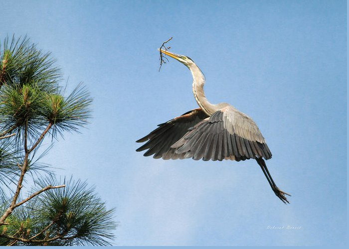 Blue Heron Greeting Card featuring the photograph Up To The Nest by Deborah Benoit