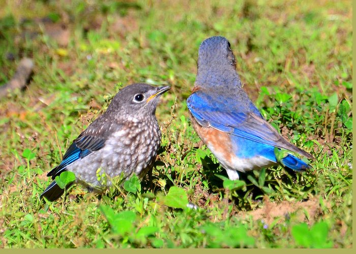 Birds Greeting Card featuring the photograph A Mothers Care by David Lee Thompson