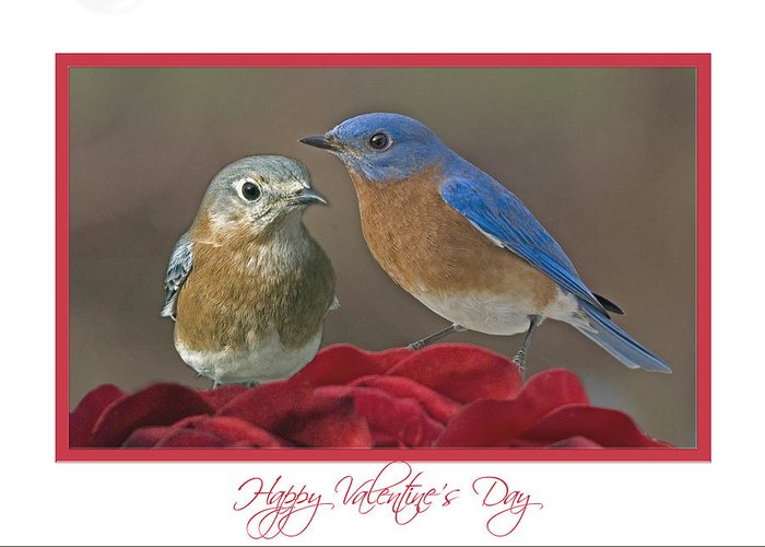 Greeting Card featuring the photograph Val03 by Helen Ellis