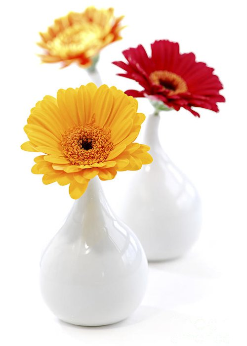 Vase Greeting Card featuring the photograph Vases With Gerbera Flowers by Elena Elisseeva