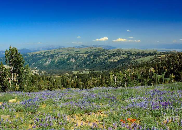 Southwest Idaho Greeting Card featuring the photograph Vast View And Lupine by Robert Bales