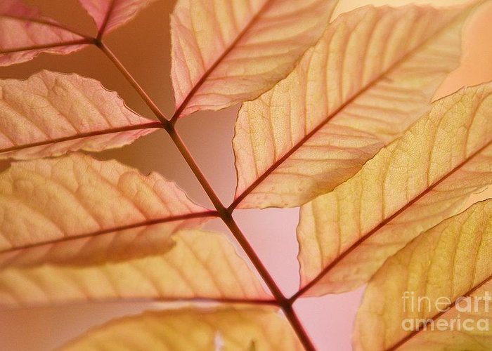 Leaves Greeting Card featuring the photograph Veins by Andrew Brooks