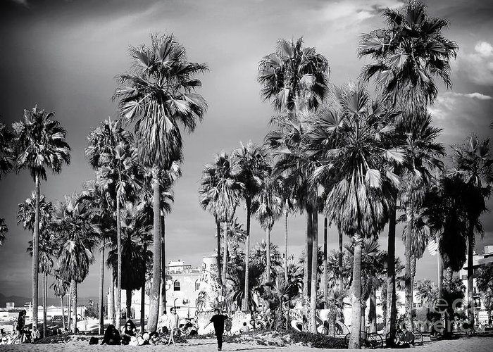 Venice Beach Palms Greeting Card featuring the photograph Venice Beach Palms by John Rizzuto
