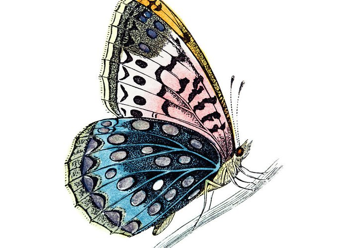 Engraving Greeting Card featuring the digital art Venus Fritillary Butterfly by Andrew howe