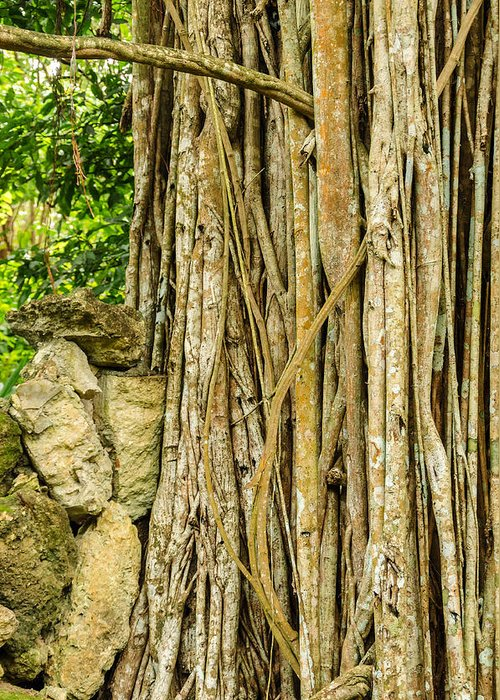 Branch Greeting Card featuring the photograph Vertical Vines by Jess Kraft