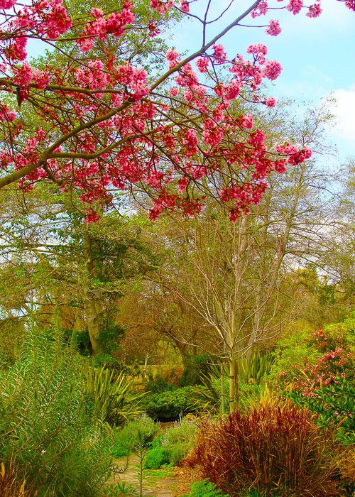 Vibrant Greeting Card featuring the photograph Vibrant Garden by Ann Michelle Smith