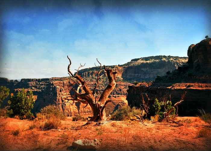 Utah Greeting Card featuring the photograph View Of The Canyon by Marty Koch