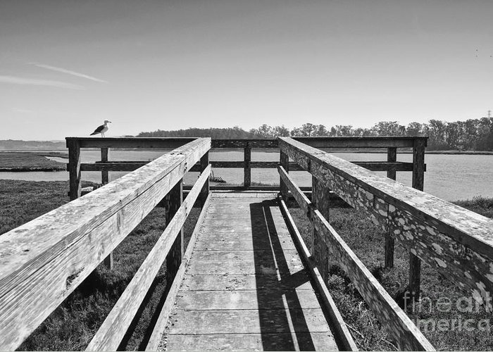 Elkhorn Slough Greeting Card featuring the photograph View Of The Elkhorn Slough From A Platform. by Jamie Pham