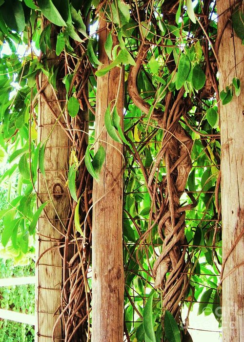 Vine Greeting Card featuring the photograph Vine 2 by Esther Rowden