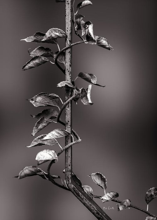Vine Greeting Card featuring the photograph Vine On Iron by Bob Orsillo