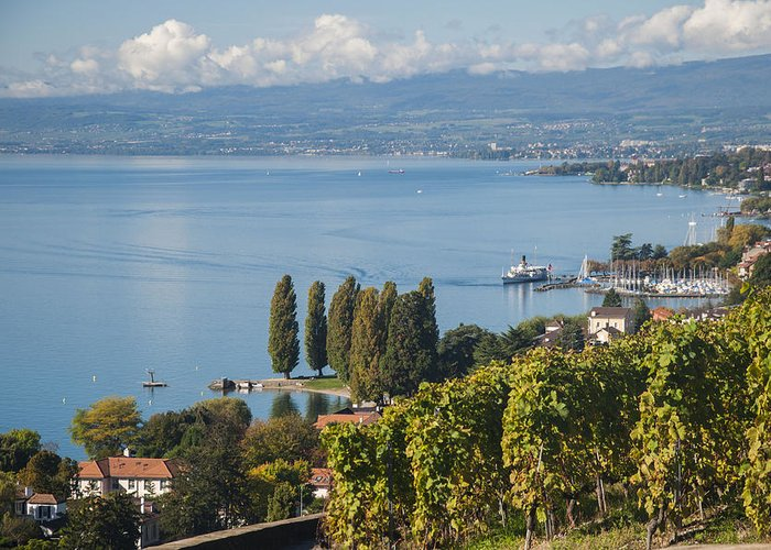 Lake Geneva Family Vacation Greeting Card featuring the photograph Vines Over Lake Geneva by Rob Hemphill