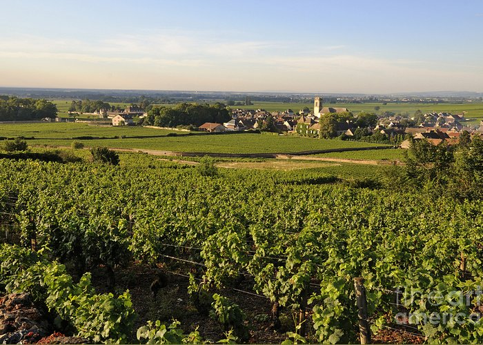Agriculture Greeting Card featuring the photograph Vineyard And Village Of Pommard. Cote D'or. Route Des Grands Crus. Burgundy.france. Europe by Bernard Jaubert