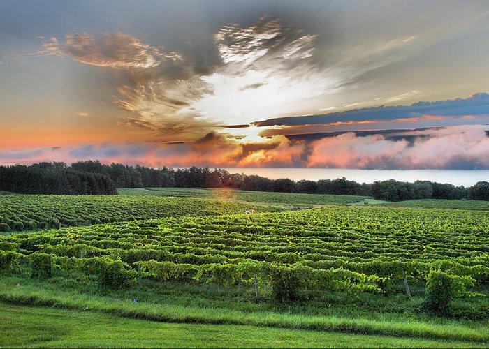 Dawn Greeting Card featuring the photograph Vineyard At Sunrise by Steven Ainsworth