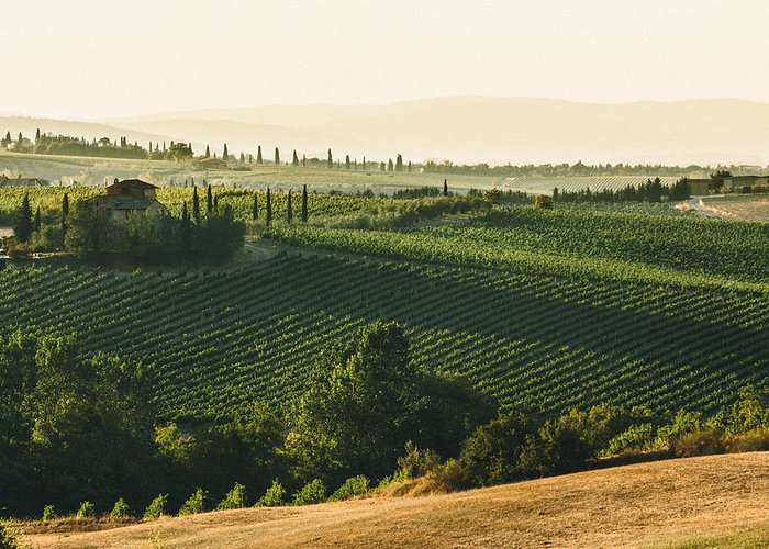 Fine Art Greeting Card featuring the photograph Vineyard From Above by Clint Brewer