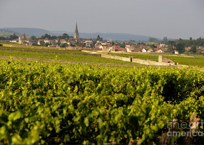 Agricultural  Greeting Card featuring the photograph Vineyard In Front Of The Village Of Meursault. Burgundy Wine Road. Cote D'or.burgundy. France. Europ by Bernard Jaubert