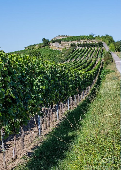 Vineyard Greeting Card featuring the photograph Vineyard In Rhineland Palatinate by Palatia Photo