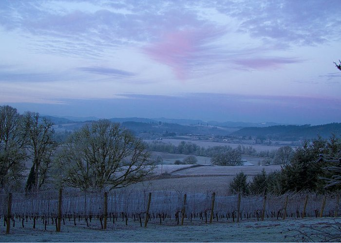 Weather Greeting Card featuring the photograph Vineyard Morning Light by Jean Noren