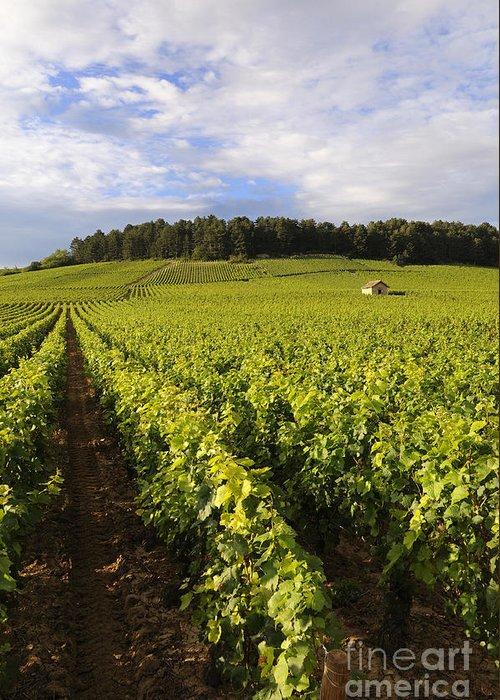 Agricultural  Greeting Card featuring the photograph Vineyard Near Monthelie. Burgundy. France. Europe by Bernard Jaubert