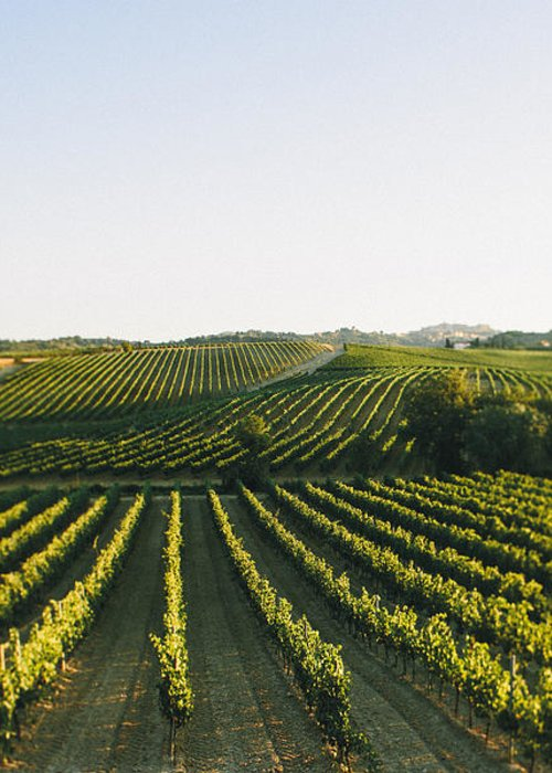 Fine Art Greeting Card featuring the photograph Vineyard Patchwork by Clint Brewer