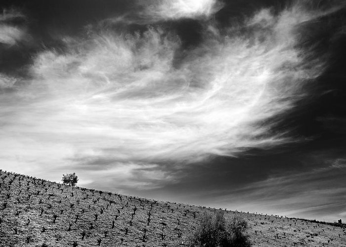 Monochrome Greeting Card featuring the photograph Vineyards by Guido Montanes Castillo